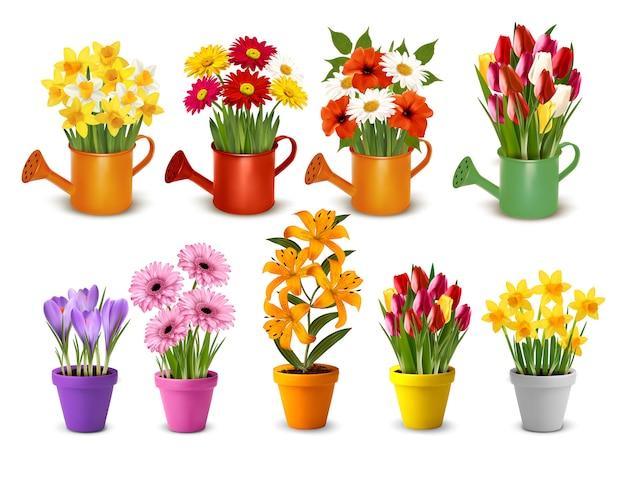 Mega coleção de primavera e verão flores coloridas em vasos e regadores.