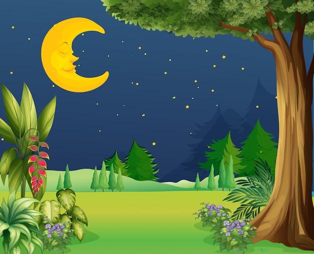 Meia lua dormindo