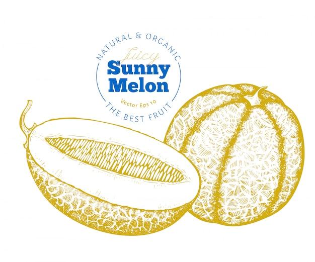 Melão inteiro e metade de melão.