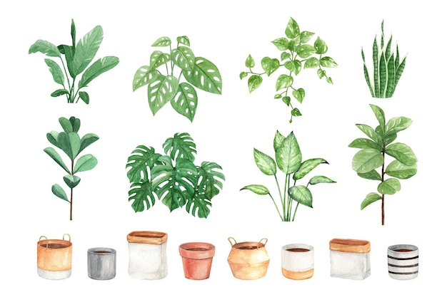 Melhor planta interior aquarela diy e vasos.