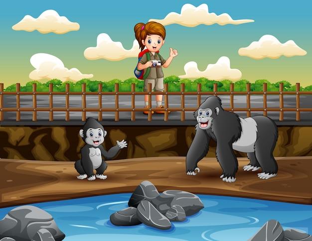 Menina safari olhando um gorila na ilustração do zoológico