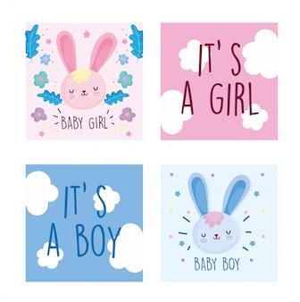 Menino ou menina, sexo revelam coelhos bonitos flores conjunto de cartão de decoração