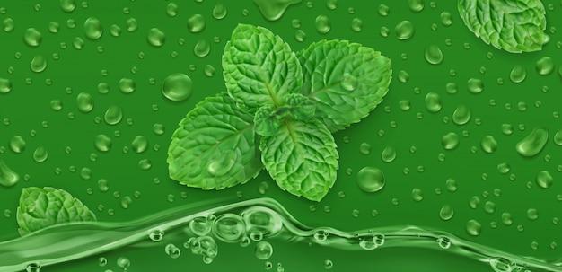 Menta, fundo de vetor realista, gotas verdes