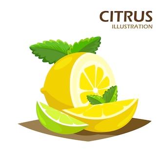 Metades de frutas cítricas e ícone realista de cunhas