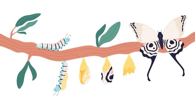 Metamorfose da borboleta. processo de crescimento e ciclo de vida da lagarta às borboletas. larva, pupa no casulo e conceito de vetor de estágio de imago. ciclo de desenvolvimento de ilustração, borboleta e lagarta