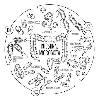 Microbiota intestinal patogênica oportunista normal da flora intestinal humana do trato digestivo