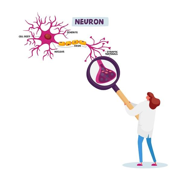 Minúsculo cientista personagem feminino vestindo túnica médica branca, aprendendo esquema de neurônios humanos com dendrito