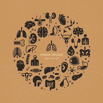 Modelo circular de ícones lineares de órgãos internos humanos e esqueleto sobre um tema médico.