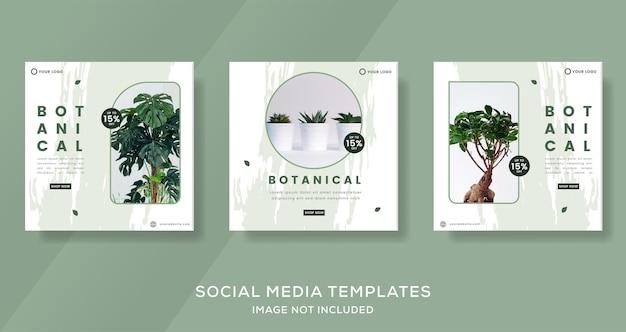 Modelo de banner de botânica com cor verde para vetor pós-premium de instagram de mídia social