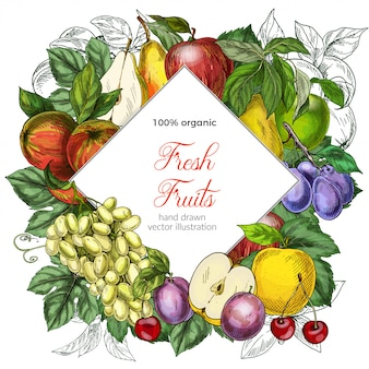 Modelo de banner de losango de frutas