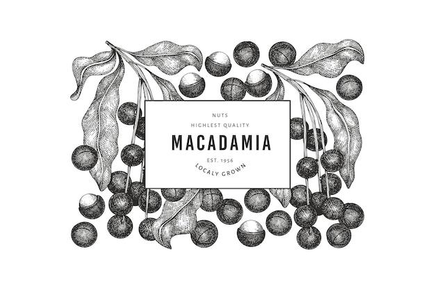 Modelo de banner desenhado à mão com ramos de macadâmia e grãos