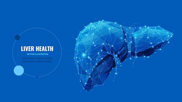 Modelo de banner do wireframe poli baixa saúde do fígado. tratamento médico de cirrose e hepatite, projeto poligonal de cartaz de serviço de transplante. órgão humano arte de malha 3d com pontos conectados