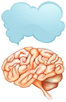 Modelo de bolha do discurso com cérebro humano