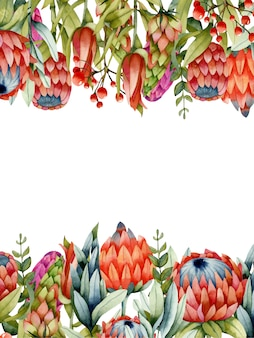 Modelo de cartão com flores de protea aquarela