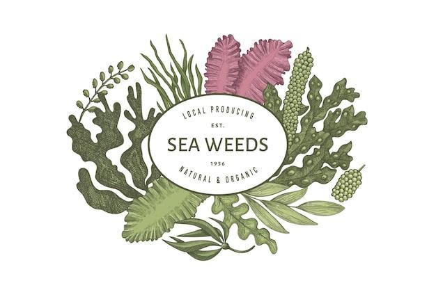 Modelo de design de algas marinhas. mão-extraídas ilustração de algas. bandeira de frutos do mar de estilo gravado.