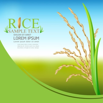 Modelo de design de publicidade de arroz