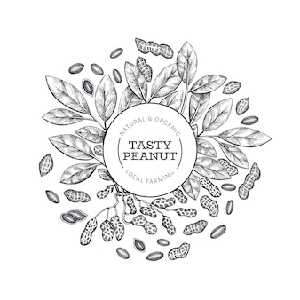 Modelo de design de ramo e grãos de amendoim desenhada de mão. ilustração do vetor de alimentos orgânicos em fundo branco. fundo retro da porca. imagem botânica de estilo gravada.