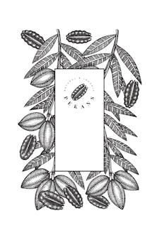 Modelo de design de ramo e grãos de noz-pecã desenhada de mão. ilustração do vetor de alimentos orgânicos em fundo branco. ilustração retro da porca. imagem botânica de estilo gravada.
