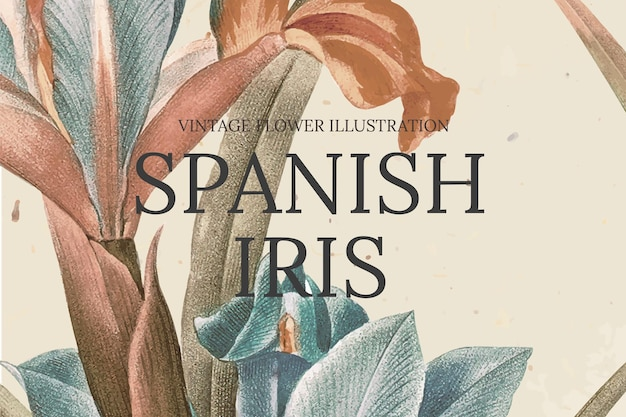 Modelo de flor desenhado à mão com fundo de íris espanhola, remixado de obras de arte de domínio público