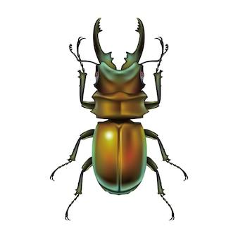 Modelo de ilustração de design de vetor de besouro de veado