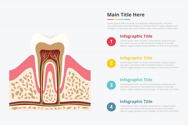 Modelo de infográfico de estrutura dentária