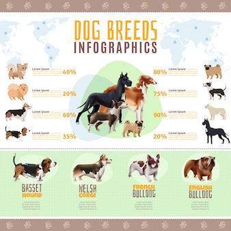 Modelo de infográfico de raças de cães