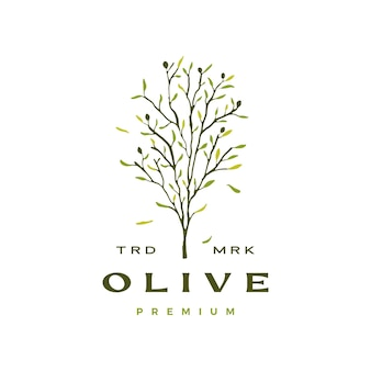 Modelo de logotipo de folha de oliveira