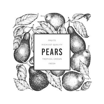 Modelo de pêra. mão-extraídas ilustração de frutas do jardim. botânico retro do jardim do estilo gravado.