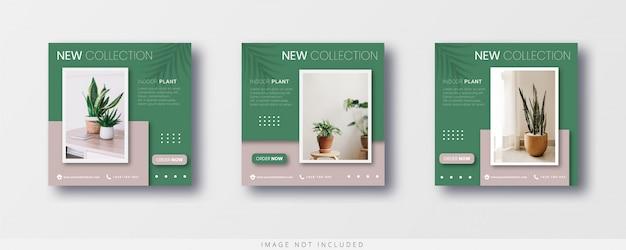 Modelo de post do instagram e banner de venda de plantas de interior modernas minimalistas
