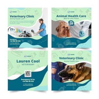 Modelo de postagens veterinárias do instagram