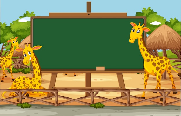 Modelo de quadro-negro com girafas felizes no zoológico