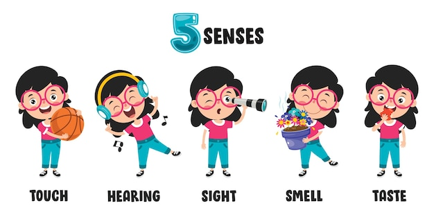 Modelo dos cinco sentidos com órgãos humanos