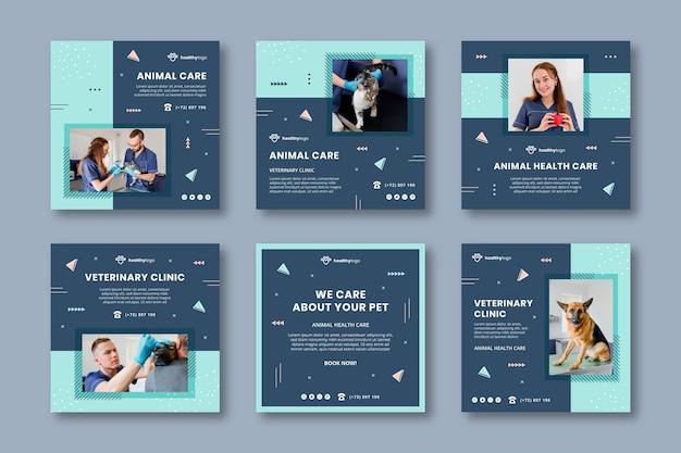 Modelos de postagens veterinárias do instagram