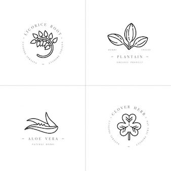 Modelos monocromáticos de cenografia - ervas e especiarias saudáveis. diferentes plantas medicinais, cosméticas - alcaçuz, aloe vera, banana, trevo. logotipos no elegante estilo linear.