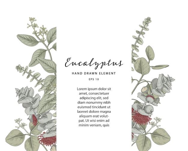 Moldura botânica de eucalipto com modelo de texto de amostra
