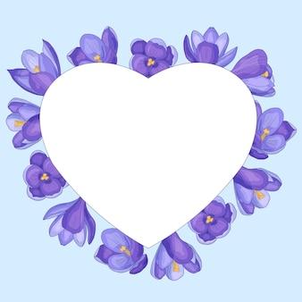 Moldura de coração com flores da primavera: açafrões roxos, em um fundo branco, dia dos namorados