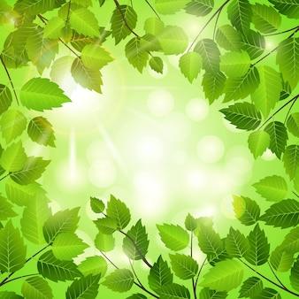 Moldura de primavera de folhas verdes frescas com copyspace central e um bohek de luz do sol cintilante em formato quadrado para conceitos ecológicos e de natureza