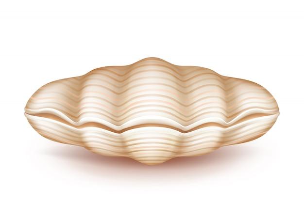 Molusco, fechado, seashell, 3d, realístico, ícone