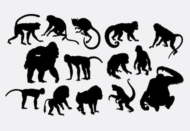 Monkey macaco e silhueta de gorila