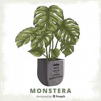 Monstera deixa no fundo do vaso