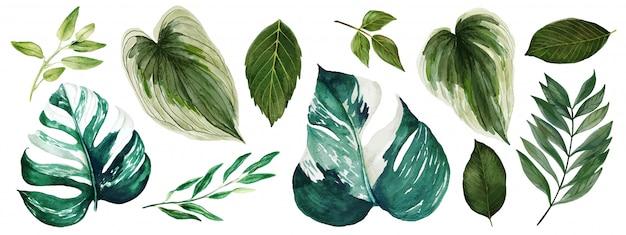 Monstera folhas, coleção de vegetação brilhante aquarela, mão desenhada