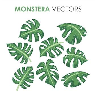 Monstera verde tropical ou selva de palmeiras deixa ilustração plana para o verão