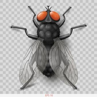 Mosca de inseto realista em vetor