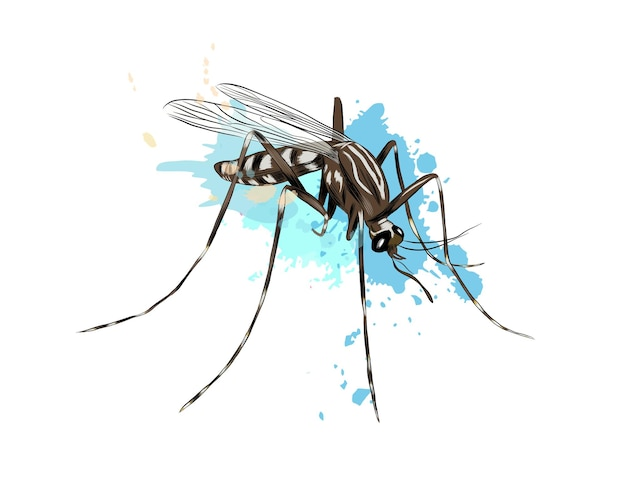 Mosquito de um toque de aquarela, desenho colorido, realista.