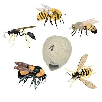 Muitas abelhas