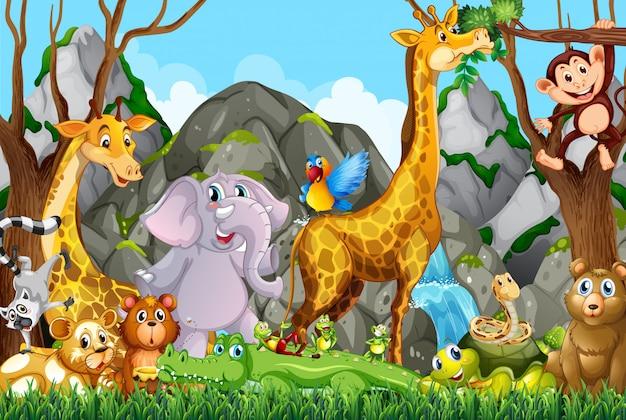 Muitos animais fofos na floresta