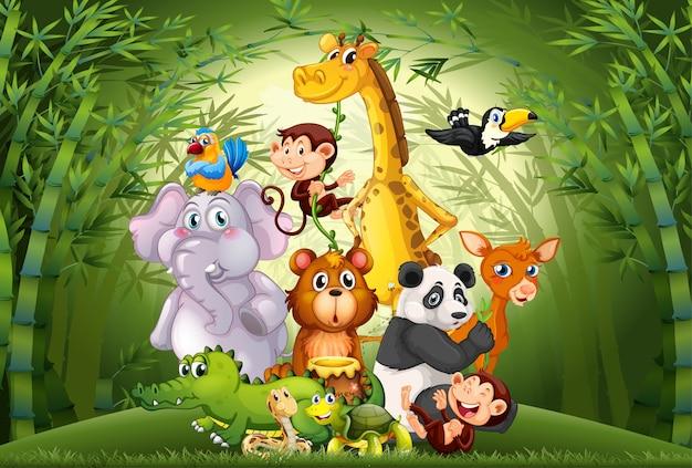 Muitos animais na floresta de bambu