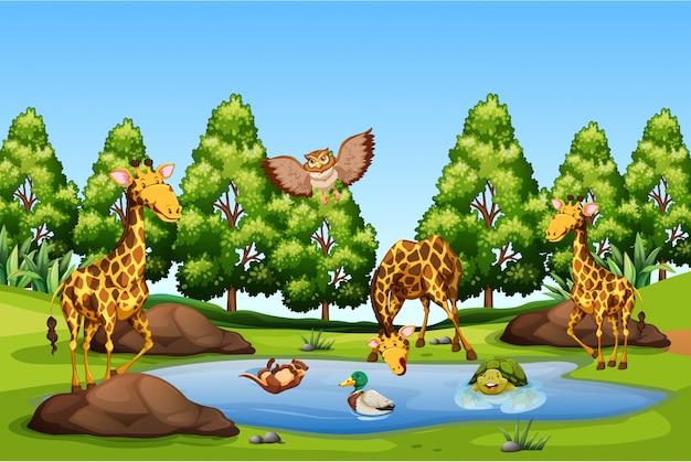 Muitos animais na lagoa