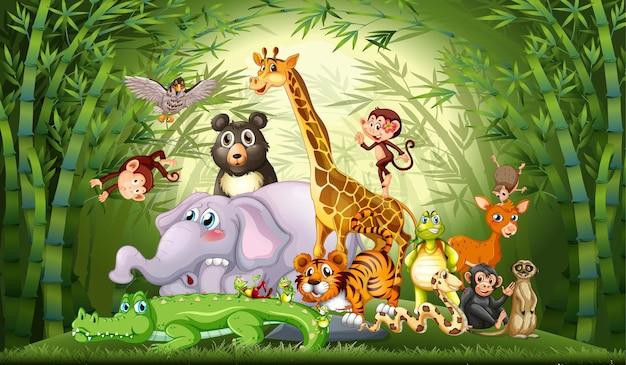 Muitos animais selvagens na floresta de bambu