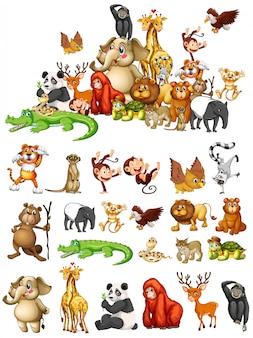 Muitos animais